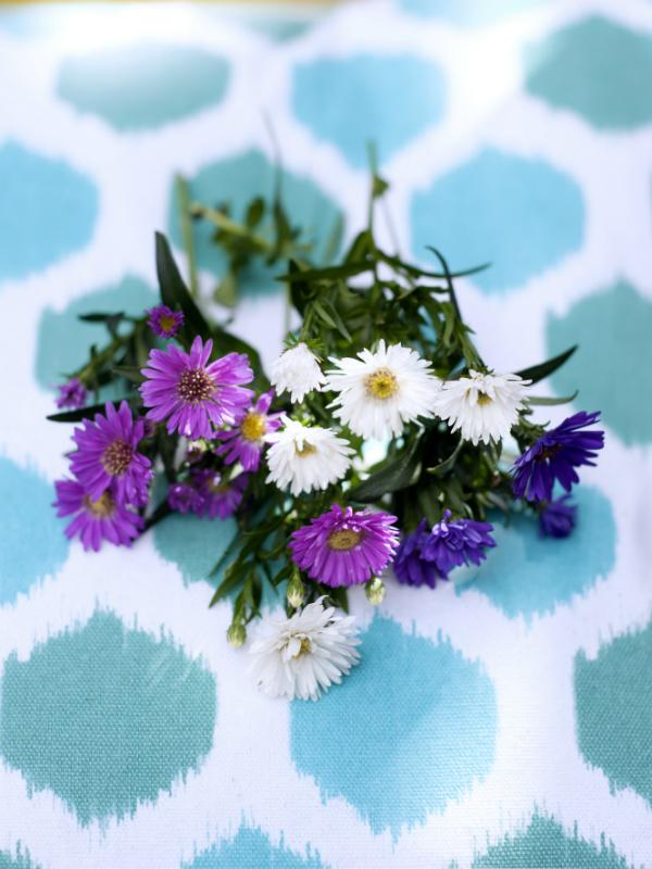 Aster | Toll was Blumen machen