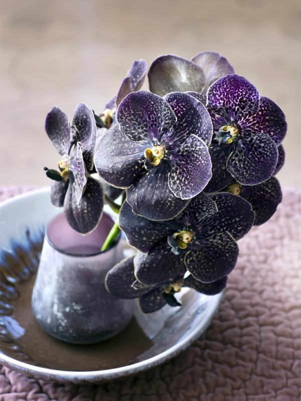 Orchidee Tollwasblumenmachen