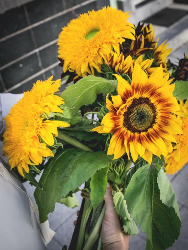 Die außergewöhnlichsten Erscheinungsformen der Sonnenblume Tollwasblumenmachen.de